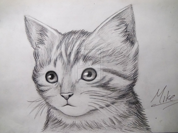 Inspiring Easy Cat Pencil Drawings Courses Simple Cat Face Sketch At Paintingvalley | Explore Collection Of Pics