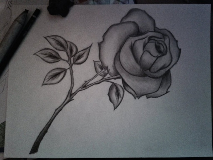 Inspiring Easy Flower Drawings In Pencil Techniques for Beginners Pencil Sketch Images Flowers At Paintingvalley | Explore Pictures