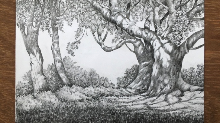 Inspiring Forest Pencil Drawing Free Landscape Drawing In Pencil | Forest Drawing | Pencil Sketch Picture
