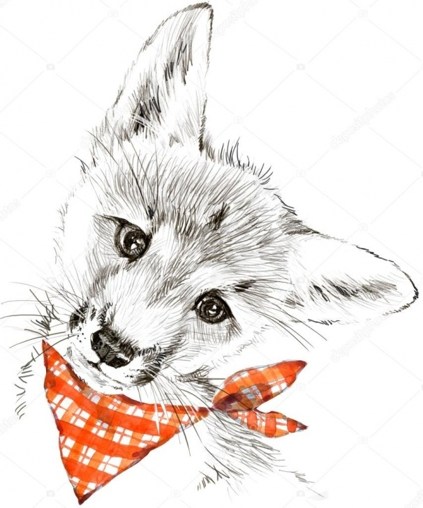 Inspiring Fox Pencil Sketch Techniques Drawings: Pencil Of Fox | Cute Fox T-Shirt Graphics. Fox Pencil Photos
