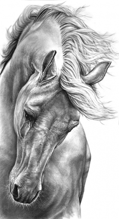 Inspiring Horse Pencil Drawing for Beginners Horse Pencil Sketch At Paintingvalley | Explore Collection Of Image
