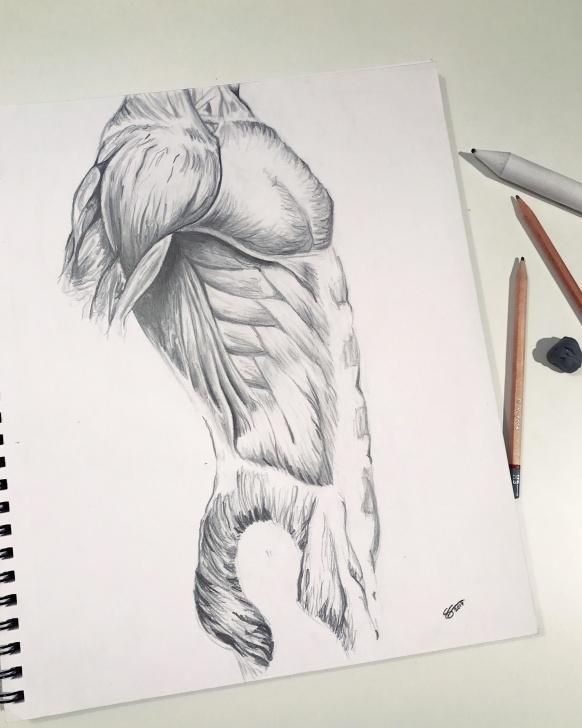 Inspiring Human Body Pencil Drawing Easy Human Body Drawing Done Last Year In Pencil : Drawing Pics