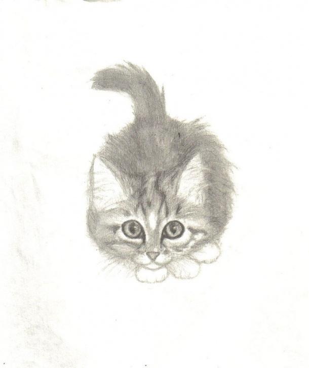 Inspiring Kitten Pencil Drawing Easy Kitten Drawings | Maine Coon Kitten By Nekoshadowcat | Kitten Pic