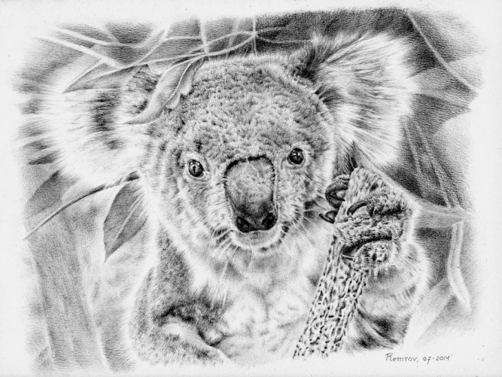 Inspiring Koala Pencil Drawing Ideas Photorealistic Pencil Drawings For Koala Hospital - Remrov's Artwork Picture