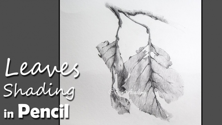 Inspiring Leaf Drawings In Pencil Step by Step Pencil Drawing Techniques | How To Shade Leaves In Pencil Picture