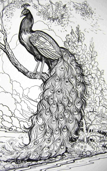 Inspiring Peacock Pencil Shading Techniques Peacock Pencil Sketch At Paintingvalley | Explore Collection Of Pictures