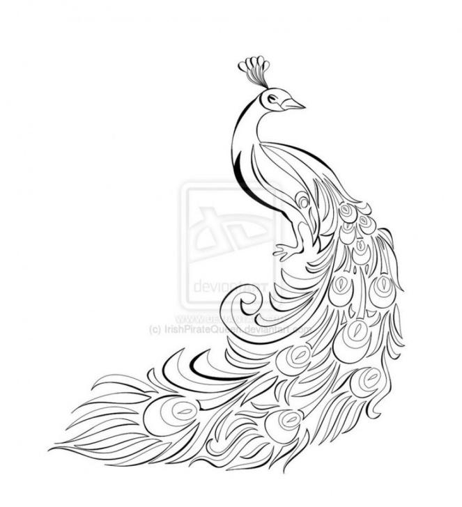 Inspiring Peacock Pencil Sketch Lessons Pinterest Pics
