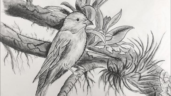 Inspiring Pencil Drawing Of Tutorials How To Draw A Bird - Pencil Drawing Of A Bird - How To Draw And Shade Using  Pencils. Photos