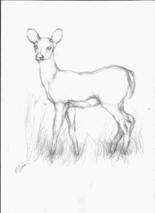 Inspiring Pencil Drawings Of Animals Courses Pencil Drawing Images Animals At Paintingvalley | Explore Pictures