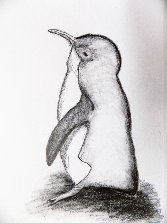 Inspiring Penguin Drawings In Pencil Courses Drawing Of Penguin, Pencil Sketch, Graphite Drawing, Original Pencil  Drawing, Little Blue Penguin Pictures