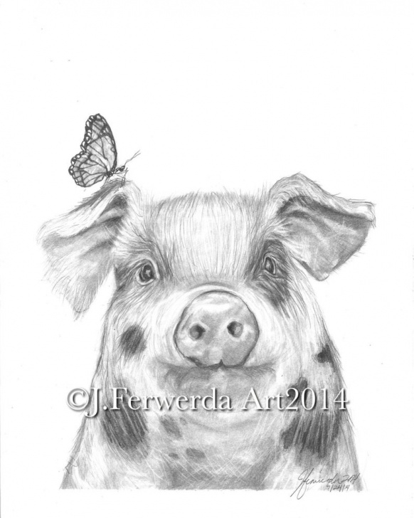 Inspiring Pig Pencil Drawing Courses Pencil Drawing Print - Pig With Wings Picture