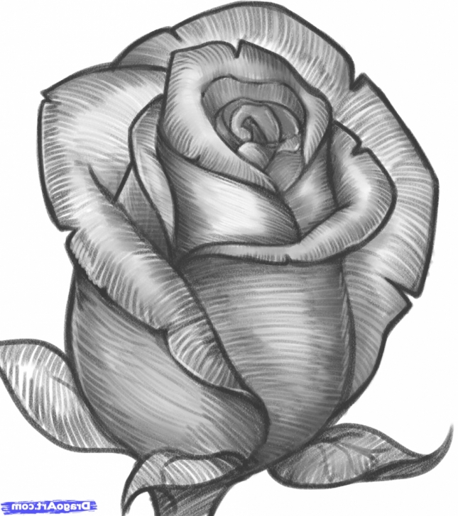 Inspiring Rose Flower Pencil Sketch Ideas Rose Flower Sketch At Paintingvalley | Explore Collection Of Photo