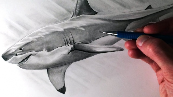 Inspiring Shark Pencil Drawing Tutorial How To Draw A Great White Shark Picture