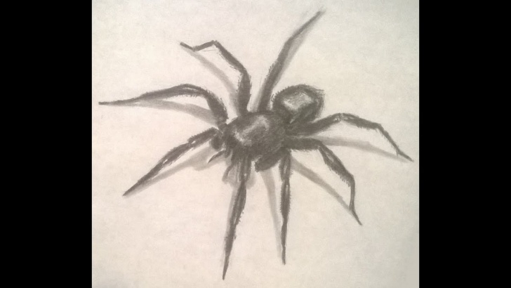 Inspiring Spider Pencil Drawing Step by Step How To Draw A Spider In Pencil Pics