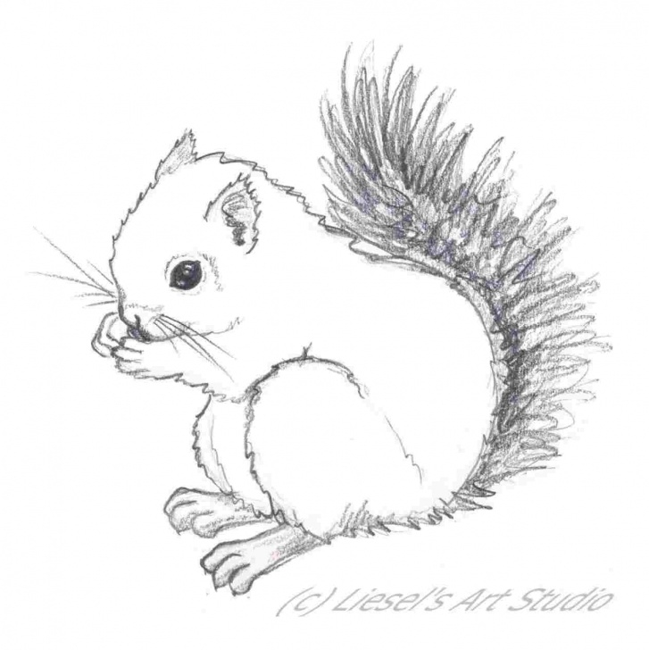 Inspiring Squirrel Pencil Sketch Ideas Pencil Sketch Of Squirrel Picture