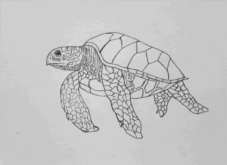 Inspiring Turtle Pencil Drawing Step by Step Sea Turtle Pencil Drawing Photos