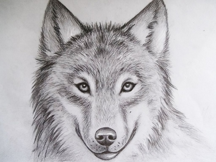 Interesting Animal Sketches In Pencil Tutorials Cool Drawings Of Animals - Pencil Art Drawing | My References In Photos
