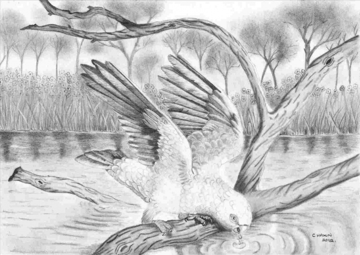 Interesting Beautiful Sketches Of Nature Step by Step Simple Beautiful Sketches Of Nature | Drawing Work Image