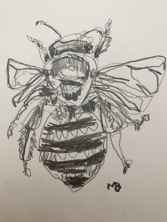 Interesting Bee Pencil Drawing Courses Honey Bee Drawn In Pencil : Drawing Image