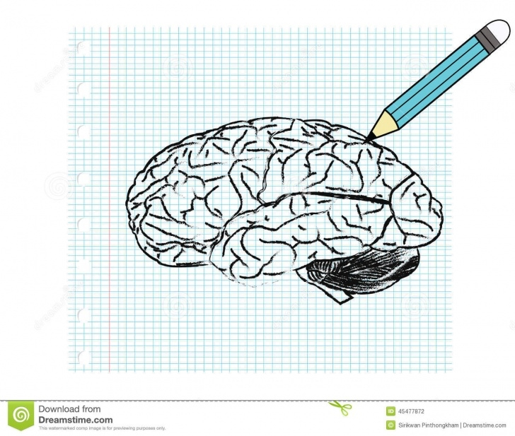 Interesting Brain Pencil Drawing Lessons Brain Stock Vector. Illustration Of Frame, Concept, Line - 45477872 Images