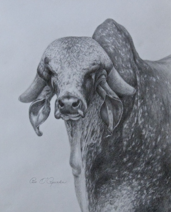 Interesting Bull Pencil Drawing Step by Step Detail Of A Bull. Original Pencil Drawing By Bo O'rourke. | My Photos