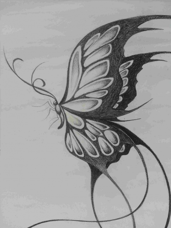 Interesting Butterfly Drawings In Pencil Free Butterfly Pencil Drawing Easy Pic