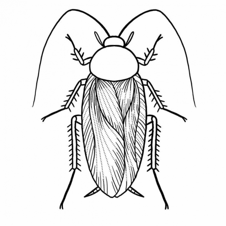 Interesting Cockroach Pencil Drawing for Beginners Cockroach Body Drawing Black Line Easy Pictures Video — Firstdacha Image