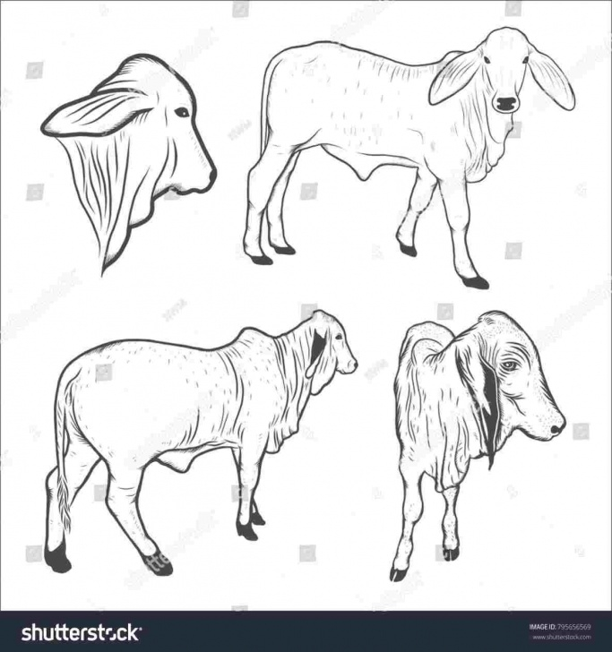 Interesting Cow And Calf Pencil Drawing Ideas Cow And Calf Pencil Drawing - Gigantesdescalzos Pics