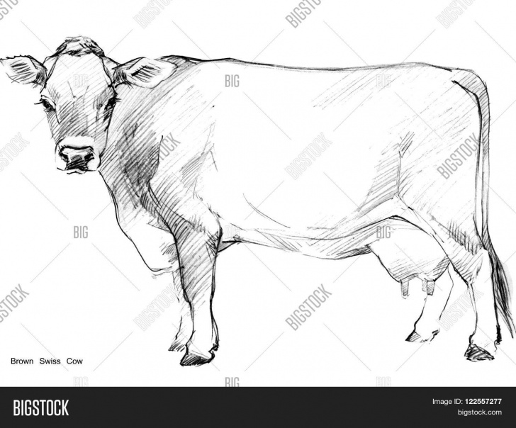 Interesting Cow Pencil Sketch Easy Cow. Cow Sketch. Dairy Image & Photo (Free Trial) | Bigstock Images