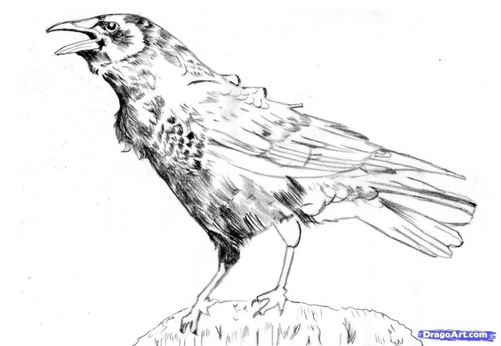 Interesting Crow Pencil Drawing for Beginners Crow Pencil Drawings | How To Draw A Realistic Crow, American Crow Images