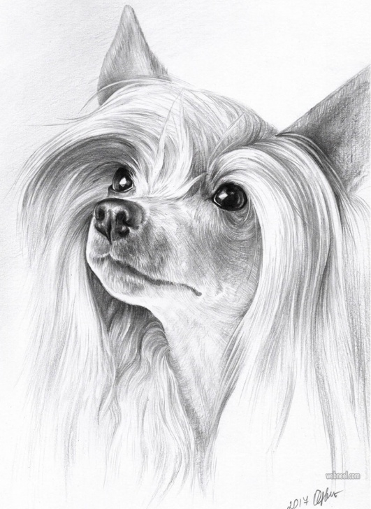 Interesting Dog Pencil Art Ideas 35 Beautiful Dog Drawings And Art Works From Top Artists Pics