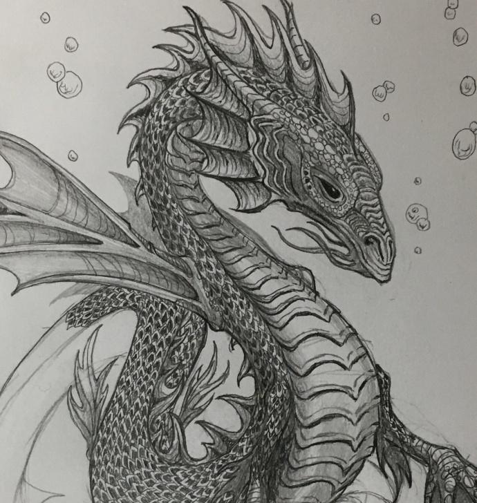 Interesting Dragon Pencil Sketch Courses Work In Progress. Pencil Drawing, Water Dragon : Dragons Photo