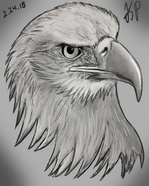Interesting Eagle Pencil Sketch Free Eagle Pencil Sketch At Paintingvalley | Explore Collection Of Picture