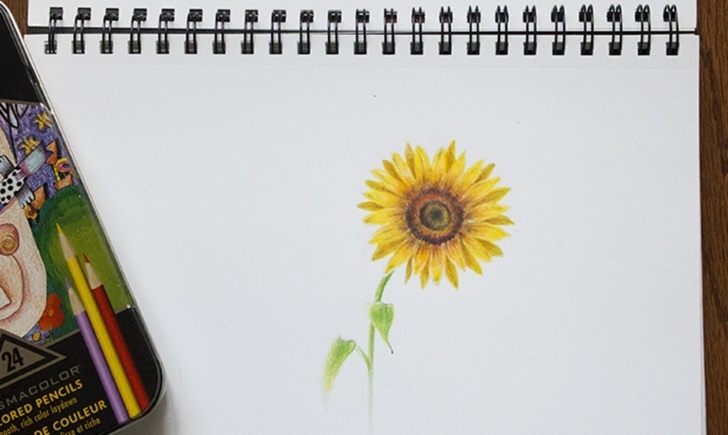 Interesting Easy Colored Pencil Drawings Of Flowers Tutorial Learn To Draw A Sunflower With Colored Pencils Photo