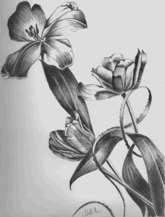 Interesting Easy Pencil Shading Drawings Of Flowers for Beginners Easy Flower Pencil Shading | Drawing Work Pics