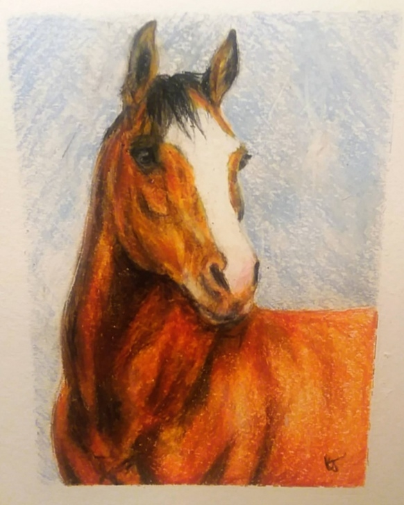 Interesting Horse Drawing Colored Pencil Lessons Horse Drawing In Color Pencil & Crayon - Album On Imgur Pics