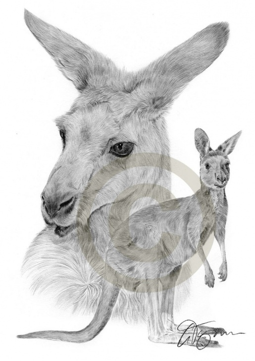 Interesting Kangaroo Pencil Drawing Lessons Australian Kangaroo Pencil Drawing Print - A3 Size - Artwork Signed By  Artist Gary Tymon - Ltd Ed 100 Prints Only - Pencil Portrait Image