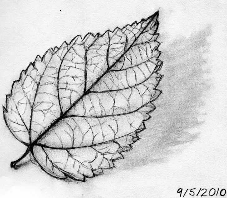 Interesting Leaf Pencil Sketch Ideas Leaves Of Drawing Concert Winstel Leaf Had She Product. Description Pictures