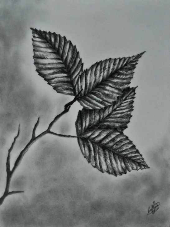 Interesting Leaf Pencil Sketch Tutorials Pencil #drawing #realistic #leaves | Pencil Sketch In 2019 Images