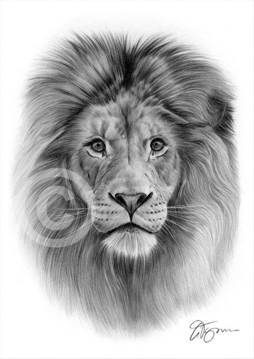 Interesting Lion Pencil Art Courses Big Cat Lion Pencil Drawing Print - Animal Portrait - Artwork Signed By  Artist Gary Tymon - 2 Sizes - Ltd Ed 50 Prints Only - Pencil Art Photos
