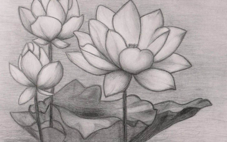 Interesting Lotus Pencil Drawing Step by Step Lotus Flower Pencil Drawing Lotus Flower Pencil Drawing Japanese .. Images