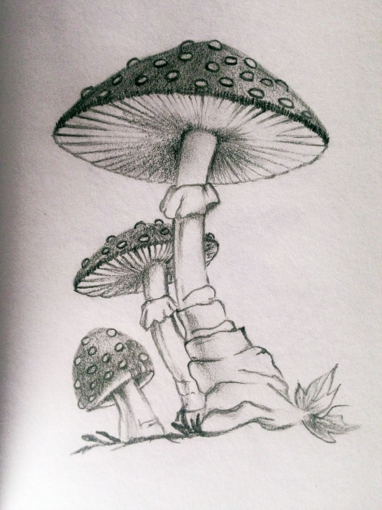 Mushroom Drawings Pencil