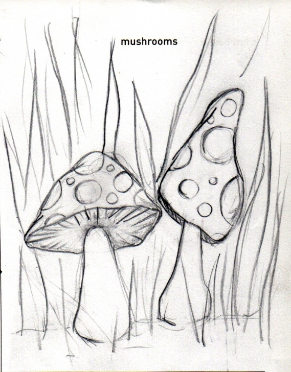 Interesting Mushroom Drawings Pencil Free Mushroom Pencil Drawing At Paintingvalley | Explore Collection Photos