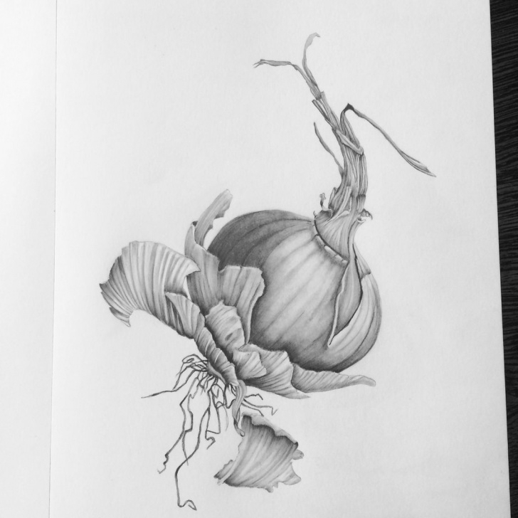 Interesting Onion Pencil Drawing Techniques Brown Onion Pencil On Paper | Art Drawings And Photographs You Can Photo