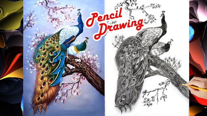 Interesting Peacock Pencil Shading Lessons How To Draw A Beautiful Peacock Pencil Shading Picture