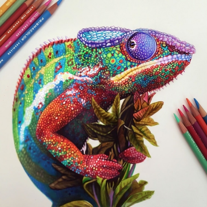 Interesting Pen And Colored Pencil Drawings Simple Exquisite Colored Pencil Drawings By Morgan Davidson Images