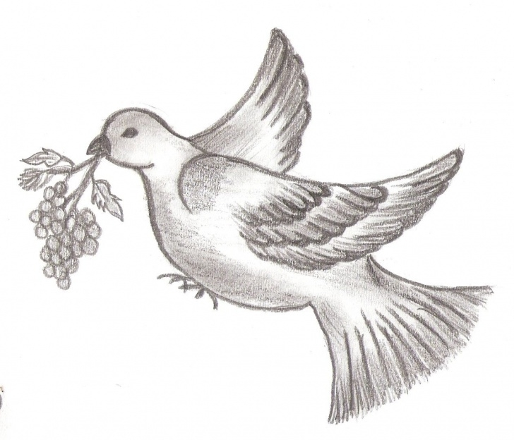 Interesting Pencil Drawings Of Birds And Animals Lessons Priyanka Sketches - Nature | Art Ideas In 2019 | Bird Drawings Pics