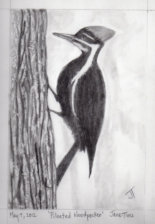 Interesting Pencil Drawings Of Birds And Animals Techniques Gallery Of Pencil Drawings Of Animals | Nichepoetryandprose Photo