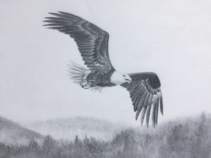 Interesting Pencil Drawings Of Eagles In Flight Ideas Bald Eagle Flying. Graphite/pencil Drawing By Elena Whitman Photo