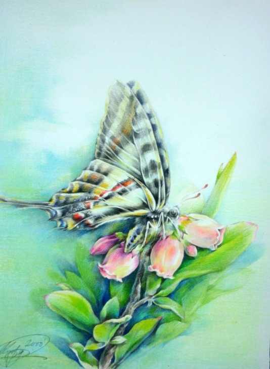 Interesting Pencil Drawings Of Flowers And Butterflies With Colours Step by Step Color Pencil Drawings Of Butterfly | ❖ Pencil Drawing ❖ | Color Pic